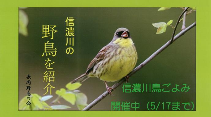 信濃川鳥ごよみ